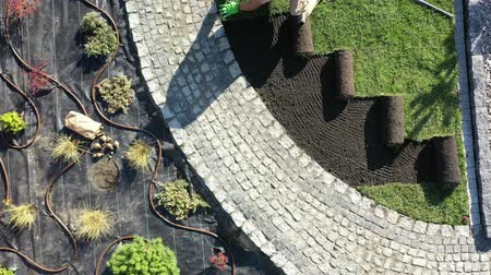 tekercselt : Caucasian Pro Gardener Installing New Rolls of Natural Grass Turfs. Professional Landscaper at Work. Stock mozgókép