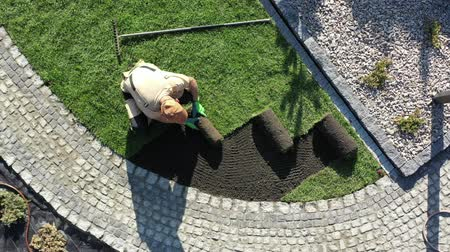 installer : Professional Landscaper Job. Caucasian Pro Gardener Installing New Rolls of Natural Grass Turfs.