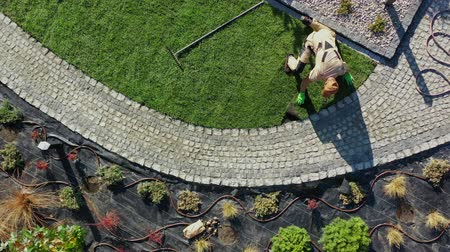 enrolado : Natural Grass Installation by Professional Caucasian Gardener in His 30s. Gardening Industry.