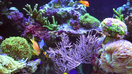 水族館 : Colorful Marine Plants and Animals in the Marine Aquarium.