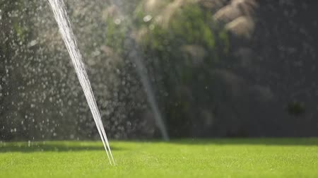 installer : Water Garden Sprinkler. Backyard Lawn Watering Using Underground Grass Irrigation System. Slow Motion Footage. Stock Footage