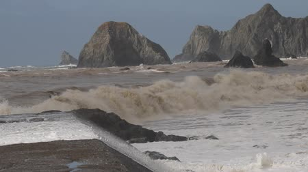 bird colony : Swirling waves on River end. The Russian river coloring brown the Pacific ocean after rain. Seagulls and Seals. Goat Rock Beach, Sonoma County, California winter.