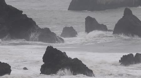 bird colony : The Pacific Ocean. Swirling waves are on Pacific ocean after rain, Goat Rock Beach, Sonoma County, California winter.