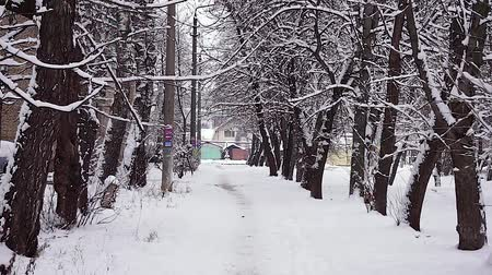 Snow-covered city alley with trees strewn with snow. Stockvideo