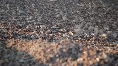 Little sea shells on sand, Sea waves on beach Vídeos