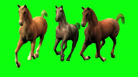 koń : This video is of three galloping horse before a green screen background