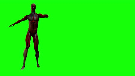 temető : Zombie Walk (left side).  Zombie Skeleton with torn muscles stiff walks before a green screen background. Zombie walks only on the left side of the screen. Right side of screen remains free for messages. Looping.