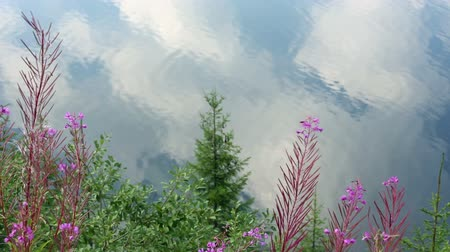 olhando a câmera : Clouds reflections in lake water and plans in front.