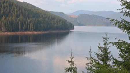 olhando a câmera : Mountain lake Vidra summer evening view (near Romania Transalpina road).