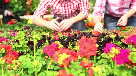 florista : Garderners Working at Nursery