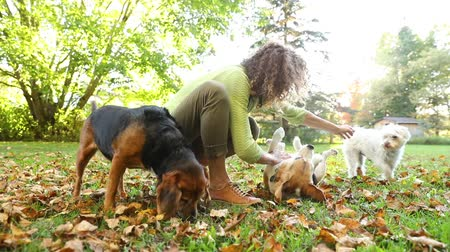 abraços : Woman playing with dogs at park or in the backyard. Slow motion video. Autumn colors, unstaged situation with candid model and playful dogs. Lifestyle and friendship concepts.