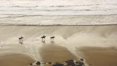senaryo : Aerial view of people riding horses at gallop on the beach. Three persons with horses at seaside having a leisure walk together. Sport and adventure concepts, epic scenario. Stok Video