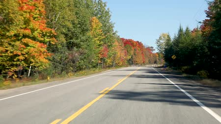 droga : Driving on American highway with trees around in autumn. Empty road in Ontario, Canada, wtih colorful maple trees during the fall season. Travel and transportation concepts