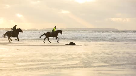 dörtnal : People riding horses at gallop on the beach at sunset. Three people riding horses at seaside on a cloudy day. Backlight with silhouette. Sport and travel concepts