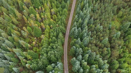drive through : Countryside road through green wood. Aerial view, top down,  of a road passing through trees with multi green and yellow leaves. Travel and nature concepts. Stock Footage