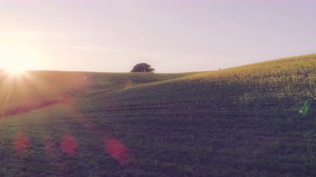 hiking : Backpacker Walking in Countryside at Sunset Stock Footage