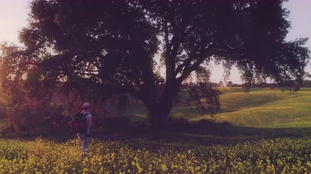 emocional : Girl Backpacking through Yellow Flowers Fields towards a Giant Oak at Sunset