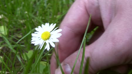 feltörés : Picking a Daisy