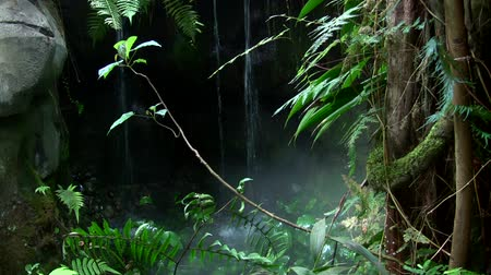 selva tropical : Cascada Tropical Archivo de Video
