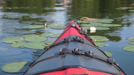 kayak : kayak bow through waterlilies