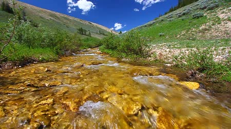 ribeiro : Beautiful stream flows through the Bighorn Mountains of Wyoming