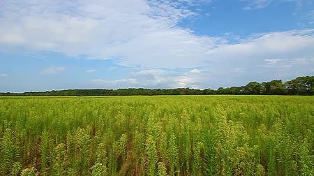 préri : Beautiful meadow scenery at Deer Run Forest Preserve in northern Illinois