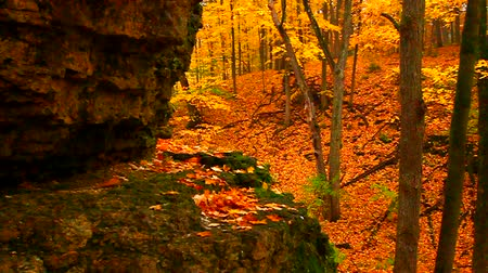 acer : Rock Cut State Park of Illinois showcases a dazzling array of colors in autumn Stock Footage