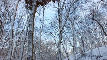 harikalar diyarı : Winter wonderland at Rock Cut State Park of northern Illinois Stok Video
