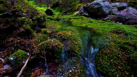 yemyeşil bitki örtüsü : Moss Covered Forest and Stream Stok Video