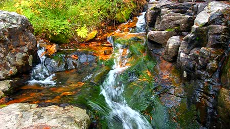 creek : Small creek cascade in the Lewis and Clark National Forest of Montana