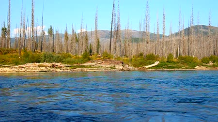 çatallar : North Fork Flathead River flows calmly along the border of Glacier National Park