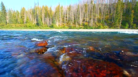 burmak : Rapids of the North Fork Flathead River on the border of Glacier National Park Stok Video