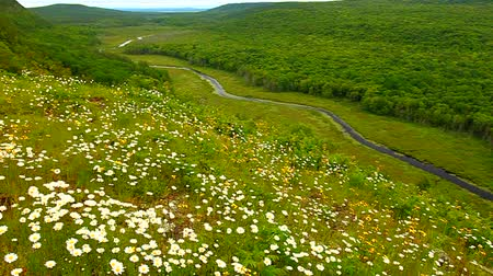 kapr : Prairie flowers overlooking the Big Carp River Valley in Porcupine Mountains Wilderness State Park