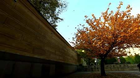 catedral : pan from autumn tree to falling leaves and sky Stock Footage