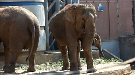 fil : Family of elephant feed in zoo