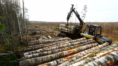 лесоматериалы : View on logger unloads timber in pile