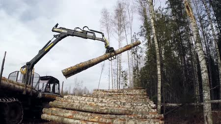 пиломатериалы : View of modern logger unloads lumber in forest