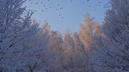 пригород : Tree tops covered with white frost low angle view