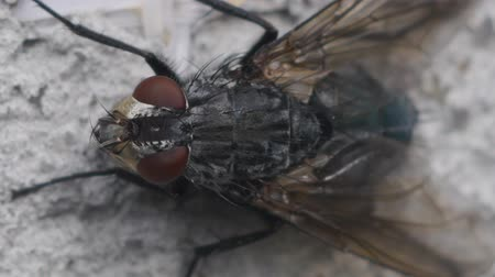 close up shot : fly Stock Footage