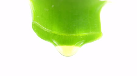 Вера : Aloe leaf with dripping clear juice