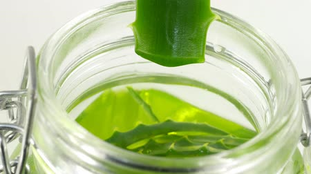 sensível : Aloe leaf with dripping clear juice