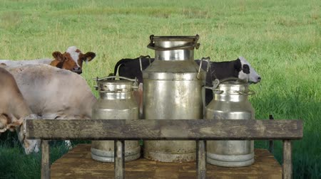 three metal cans on milk on cow background