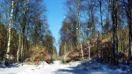 snowflakes on the background of the forest