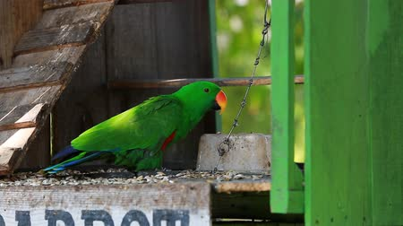 ara : beautiful green parrot Stock Footage