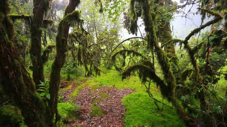 deep forest : Rain forest with moss in natural park