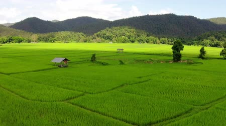 outside view : Aerial shot rice field and mountain view Stock Footage