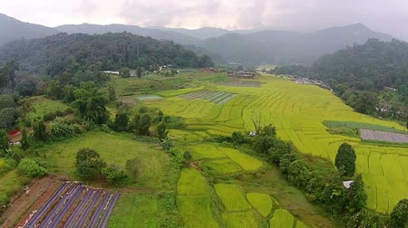 dron : Aerial shot rice field and mountain view Wideo