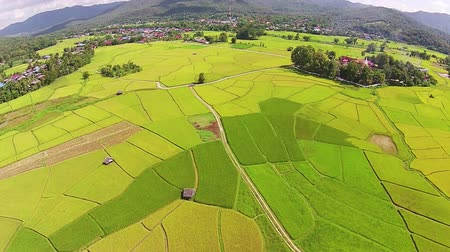 Aerial shot rice field and mountain view 影像素材