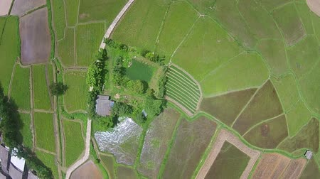 Top view Aerial shot rice field