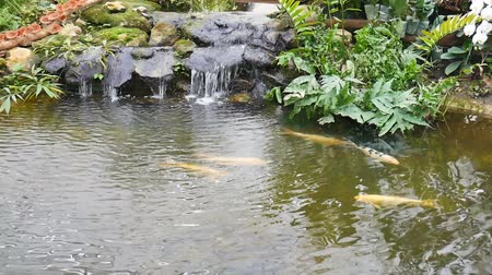 water fall with koi fish in garden 影像素材